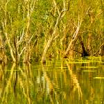 """Yellow Waters At Kakadu 02 -NT"" by gthomas68"