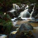 """J.C. Slaughter Falls, Mt. Coot Tha, Brisbane"" by davidburrows"