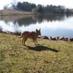 """""""Dog at lake"""" by arag"""