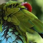 """""""Macaw"""" by tornado98"""