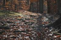 Leaf Littered Path