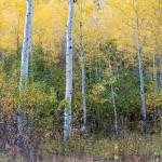 """Changing Seasons, Grand Teton National Park, Wyomi"" by HiddenLightPhotography"