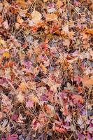 Fallen-Pink-Gold-Leaves-Zion-National-Park