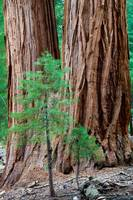 Parents and Children of Sequoia National Park