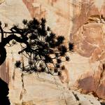 """Zion Tree and Rock Silhouette"" by HiddenLightPhotography"