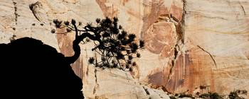 Zion Tree and Rock Silhouette