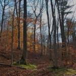 """Autumn Woodland"" by ArianasArt"