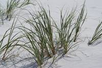 Sea grass at beach