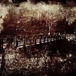 """""""Bridge, Central Park"""" by penumbrapics"""