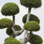 """Mushroom tree"" by pradyshotit"