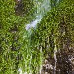 """""""Water and Moss"""" by pradyshotit"""