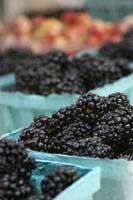 Blackberry Rush