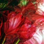 """""""Red Tulips"""" by seashoreartist"""