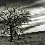 """Solitary (landscape) 4"" by RobTerwilliger"