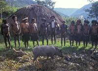 Chief with tribe and prize pig
