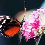 """""""Butterfly"""" by Vincent-tang"""