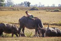 Boy on Water Buffalo