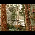 """Leschi Trees 50mm"" by Danusunt"