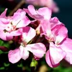 """Beautiful flowers"" by Quitcherbitchin"