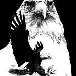 """Bald Eagle"" by Tim"