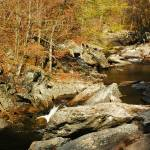 """NC_TN_Smokies_LittleRiver_110207"" by annmerritt"