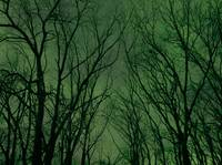 Insomnia Trees with Green Stary sky