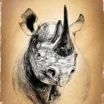 """African Rhino"" by Tamixes"