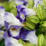 """""""violets"""" by JSphotography"""