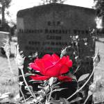 """Cemetery rose with color emphasis"" by aswendener"