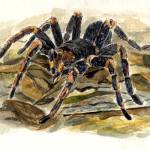 """tarantula"" by LouiseCrowe"