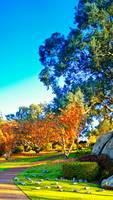 Autumn Colours At Cowra 09 -NSW