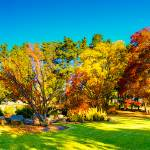 """Autumn Colours At Cowra 07 -NSW"" by gthomas68"