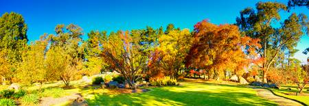 Autumn Colours At Cowra 07 -NSW