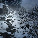 """First Snow on Mount Pilchuck Trail"" by markwhitesell"