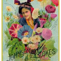 Johnson Stokes Seed 1898 Art Prints & Posters by V. Watson
