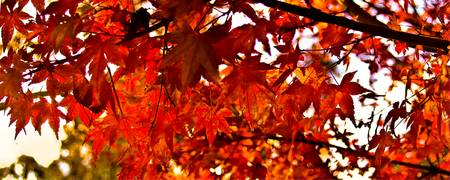 AutumnLeaves 01 -NSW