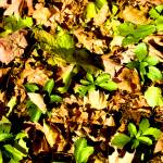 """Green and Dead Leaves"" by PhillyandMe"