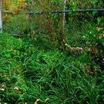 """Overgrown Fence in Fishtown, Philadelphia"" by PhillyandMe"