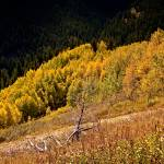 """Autumn-Colors-in-Colorado-3"" by naturesimages"