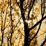 """""""Sunlight--Gold"""" by KelliDee"""