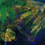 """""""Jelly Fish Diving the reef Series"""" by BuddhabellyDave"""