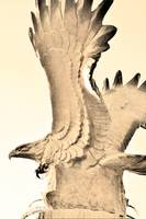 Eagle Wings--3