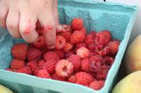Picking Raspberry