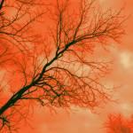 """Tangerine Branches"" by MaskofBlue"