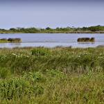 """Outer Banks, Salt Marsh-1"" by naturesimages"
