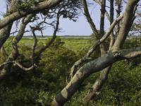 Outer Banks, North Carolina Salt marsh 2