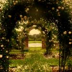 """Rose Garden"" by danasalzillo"