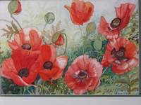 Red poppies,