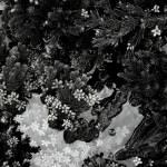 """Pine Forest inblack"" by silvercordart"