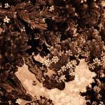 """""""Pine Forestpink"""" by silvercordart"""